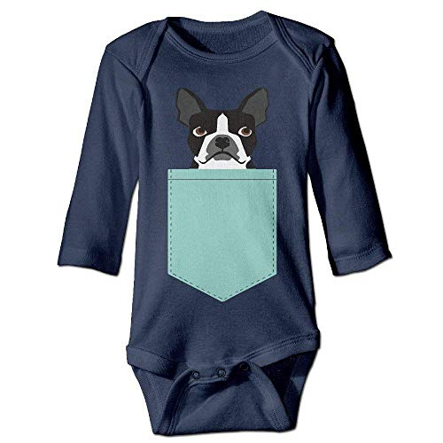 TOOTHBRUSH Infant Boston Terrier and French Bulldog for sale  Delivered anywhere in Canada
