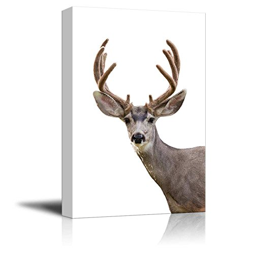 wall26 Canvas Wall Art - A Deer - Giclee Print Gallery Wrap Modern Home Decor Ready to Hang - 24