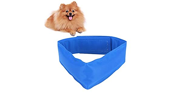 Amazon.com: Dog Tag Id - Dog Cooling Collars Safe Gel Leash Pet Summer Sunstroke Prevention Neck Collar Large Dogs - Isabelino Zipper Stay Inoxidable Quiet ...