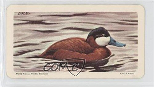 Ruddy Duck (Trading Card) 1962 Brooke Bond Red Rose Birds of North America - Tea [Base] - Canadian Black Backs #20