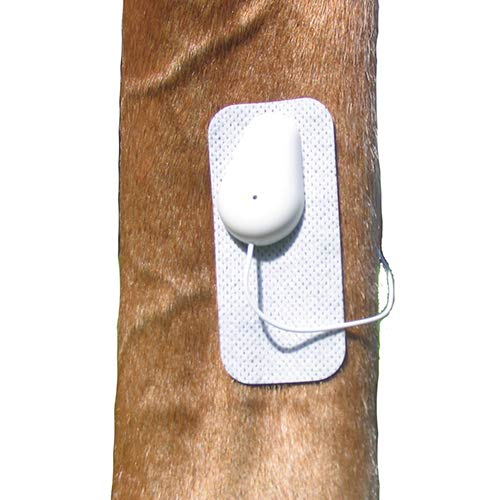 Microlief Under Wraps - Natural Pain Relief Therapy Patch for Equine Injury Prevention, Treatment, Recovery and Rehabilitation - Basic Kit by Microlief