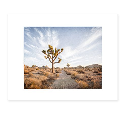 Joshua Tree Wall Art, California Desert Decor, Palm Springs Landscape Art, 8x10 Matted Photography Print, 'Path to Joshua' - Valleys Framed Landscape Art