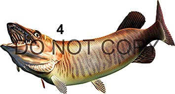 Many Sizes and Styles Available 12 to 40/… Tiger Musky Beautiful Fish Decal for Your Boat Vehicle Etc