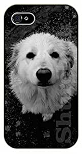 iPhone 4S White dog facing up - black plastic case / dog, animals, dogs