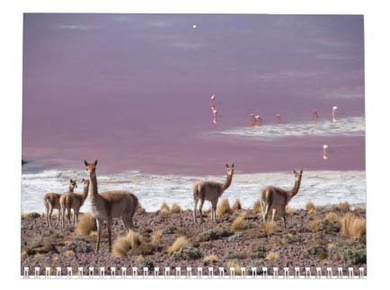 Llama Calendar - Best South America Images in Snow Capped Andes Mountains of Bolivia and Peru Photo #6