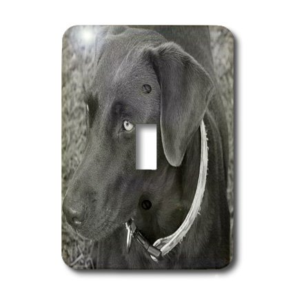 3dRose Lsp_14144_1 Chocolate Lab Black and White Single Toggle Switch