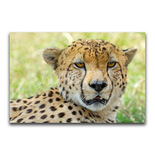 - HaoHuaman DIY 3D Diamond Painting Leopard Full Square Diamond Embroidery Cross Stitch Animal Heads Full Round Diamond Mosaic Square Drill 20x30cm