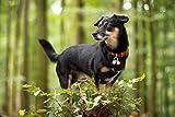 Beau's Bells 2 Extra Loud Cat & Dog Bells   Pet
