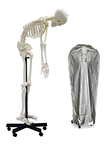"Vision Scientific VAS229 Full Size Flexible Human Skeleton -67"" (170cm) , including DCA-01 Thick Zip Dust - Arm Anatomy Diagram"