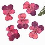 Christmas-Decoration-Pansy-Press-Flower-15-30-Mm-Dried-Flower-1-Lot-120-Pcs25-4Cm