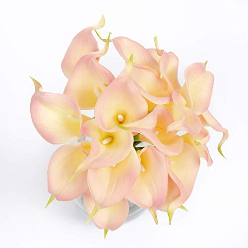 Floral Kingdom 14