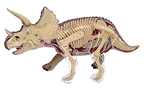 Amazon No23 Triceratops Anatomical Model Three Dimensional