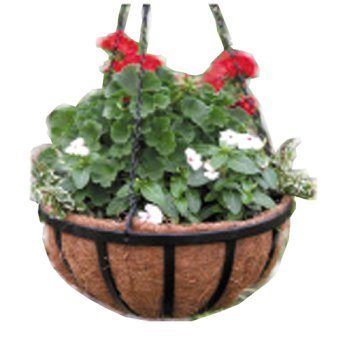 - Border Concepts 72188 Wrought Iron Traditional Hanging Basket, 16-Inch