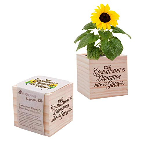 Employee Appreciation Gifts (Real Desk Plant for The Office - Yellow Sunflower Plant Seed Packet, Peat Pellet, and Natural Pine Wooden 3x3 inch Cube Planter - Employee Appreciation Gift -