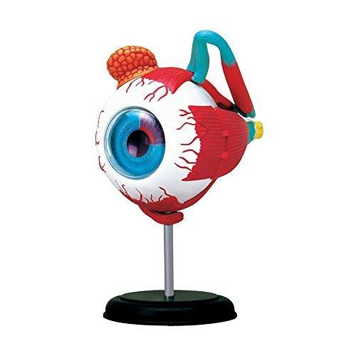 4D Vision Human Anatomy - Eyeball Anatomy (4d Anatomy Eyeball Model)