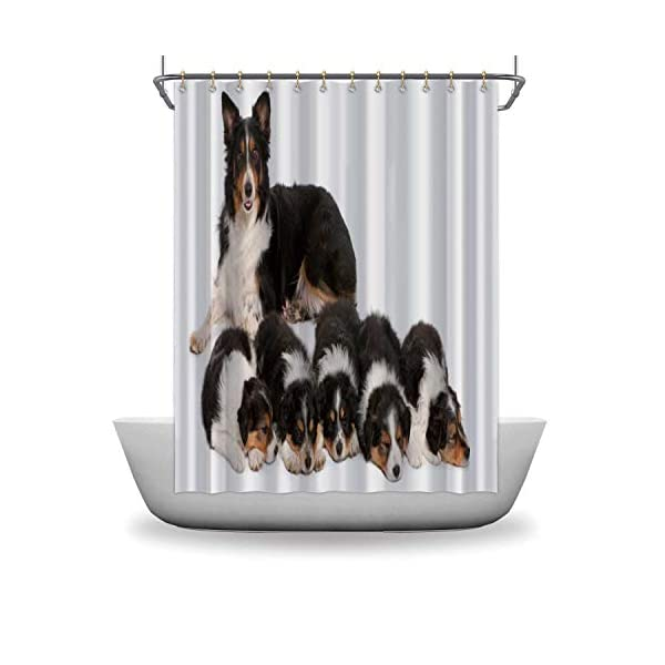 ALUONI Female Border Collie Shower Curtains Set with Hooks,3 Years Old for Shower,59''W x 71''H 3