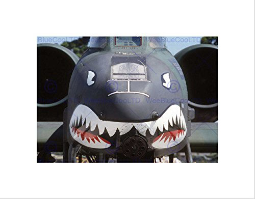 Wee Blue Coo The Art Stop Military AIR Plane Fighter Jet Thunderbolt Nose Gun Shark Print B12X3596