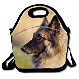 Best PackIt Ladies Lunch Bags - Belgian Tervuren Neoprene Lunch Bag Insulated Lunch Box Review