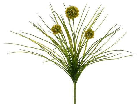 18-Allium-Bush-Yellow-Pack-of-12