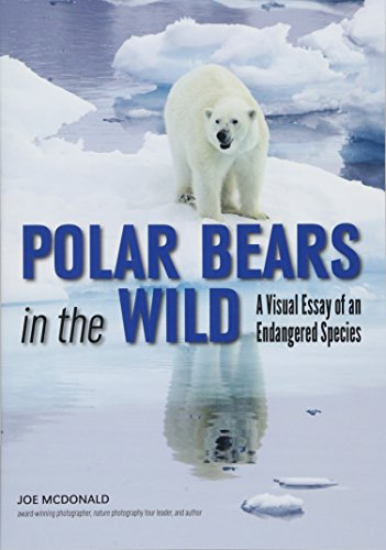 (Polar Bears In The Wild: A Visual Essay of an Endangered Species)