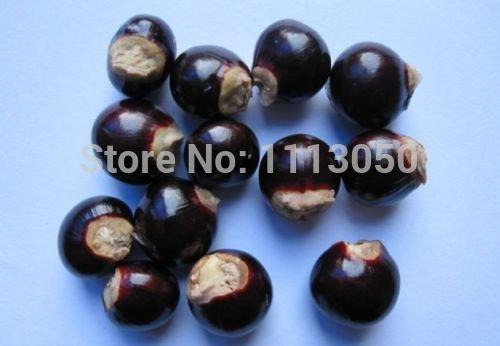 OJO Nueva Rare10 vivo DRAGONS ex/ótica LONGAN Dimocarpus semillas dulce fruta de /árbol tropical