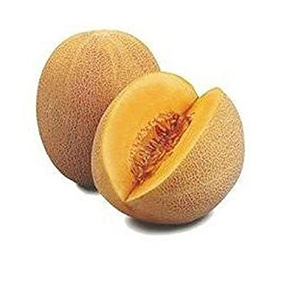 Ananas Cantaloupe - Extremely sweet, juicy and VERY aromatic! Very Rare!!!!! (100 - Seeds) : Garden & Outdoor