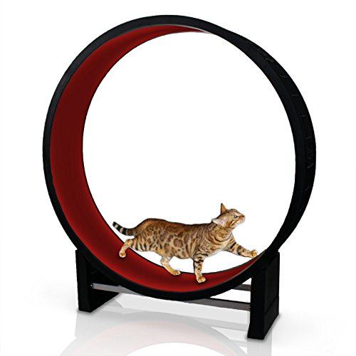 CanadianCat Company Cat in Motion in red - Running...