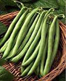 Blue Lake Pole Bean - 100+ Seeds - PLUS PACK SAVINGS!