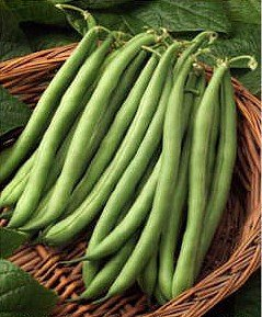 Blue Lake Pole Beans - Blue Lake Pole Bean - 100+ Seeds - PLUS PACK SAVINGS!