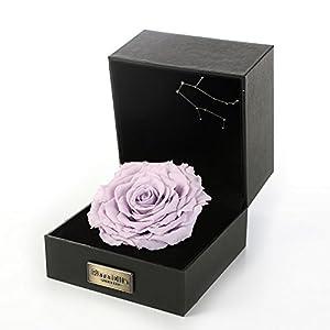 PARA ELLA Preserved Rose 49