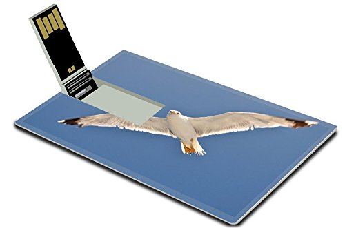 Cruzer Freedom Usb (Luxlady 32GB USB Flash Drive 2.0 Memory Stick Credit Card Size White Seagull with spread wings flying against a blue sky Croatia IMAGE 21213867)