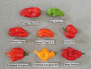 Brand New! 240 Pcs, Pepper Seeds,8 Worlds Hottest Pepper , RARE Chili Pepper Seeds