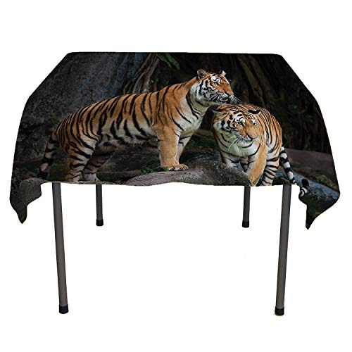 (Animal Decor Kitchen Tablecloth Tiger Couple in The Jungle on Big Rocks Image Wild Cats in Nature Print Grey and Ginger Waterproof tablecloths Spring/Summer/Party/Picnic 60 by 90)