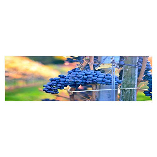 Leighhome Fish Tank Background Decor Static Image Backdrop Wallpaper Sticker Cling Decals Grapes on The Grapevine Waiting for Picking Wallpaper Sticker Background Decoration L29.5 x -