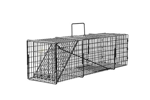 9 x 10 x 24 Professional Light Compact Opossum, Cat, Rabbit Live Trap with Rear Release Door T91024PLCR ()