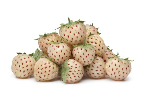 Pineberry White Strawberry 100 seeds HIGH Yield