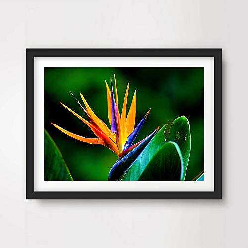 BIRD OF PARADISE TROPICAL EXOTIC FLORAL FLOWERS PHOTO ART PRINT Poster Home Decor Botanical Nature Photography Wall Picture A4 A3 A2 (10 Size Options)