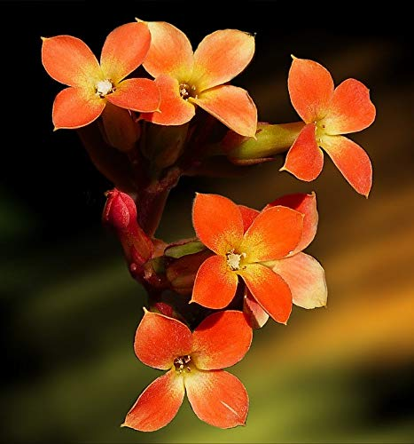 Home Comforts Canvas Print Orange Tiny Plant Nature Yellow Blossom Flowers Vivid Imagery Stretched Canvas 32 x 24