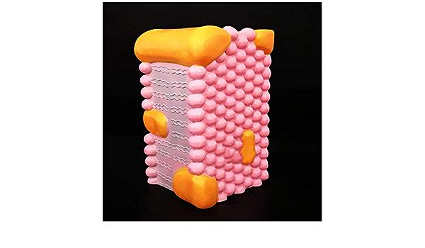 FHUILI Estructura de la Membrana Celular Model - Modelo de ...