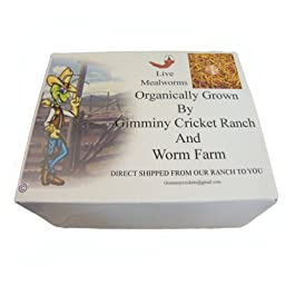 1100 Count Live Mealworms Organically Grown By Bassett\'s Cricket Ranch