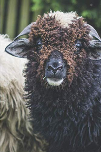 SHEEP! A 2019 Weekly Planner: Featuring August (Best Laid Plans) (Best Laid Plans 2019)