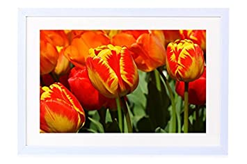 amazon yellow red tulips art print white wood framed wall art