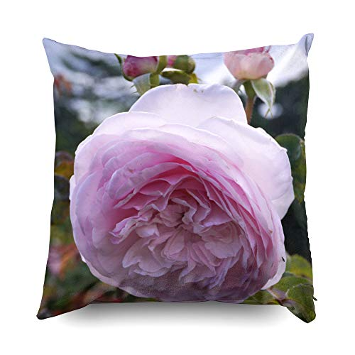 TOMWISH Hidden Zippered Pillowcase Flowering Pink Salmon English Rose Bush in Summer Olivia 16X16Inch,Decorative Throw Custom Cotton Pillow Case Cushion Cover for Home Sofas,Bedrooms,Offices,and More
