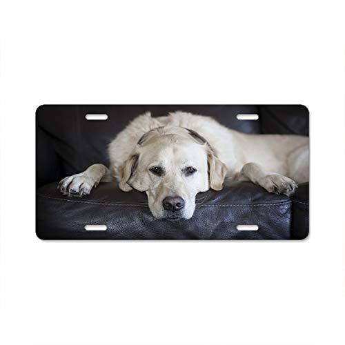 Hizhongmen Labrador Retriever License Plate Frame, Car Tag Frame, US License Plate Frames,License Plate - Accessories Decorative Labrador Retriever