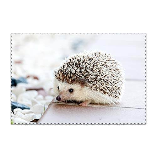 Sbfhdy Placemats for Dining Table Cute Hedgehog Durable Kitchen Table Mats Washable Heat Resistant Stain-Resistant Non Slip Placemat Ballard Round Dining Table