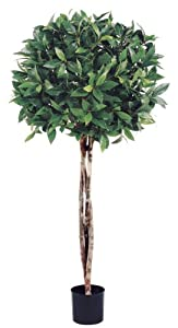 Allstate floral craft bay leaf topiary for Allstate floral and craft