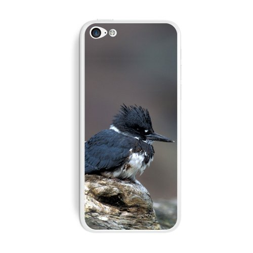 graphics-and-more-belted-kingfisher-bird-protective-skin-sticker-case-for-apple-iphone-5c-set-of-2-n