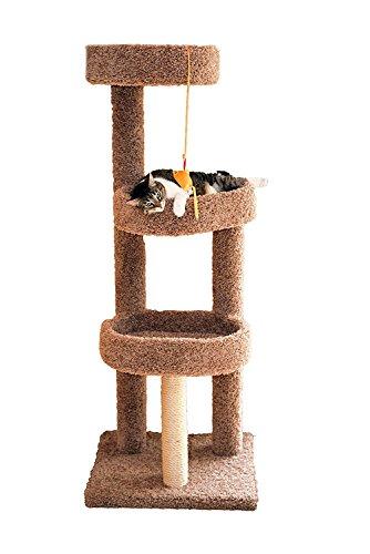 Carpeted Cat - 8