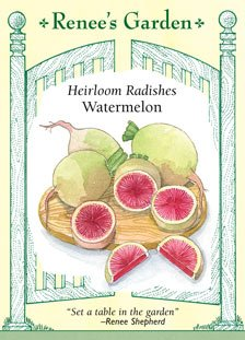 Radishes - Watermelon Seeds