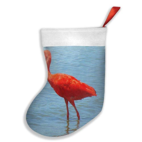 Christmas Stockings Scarlet Tobago National Bird Fabulous Socks Christmas Decor 18